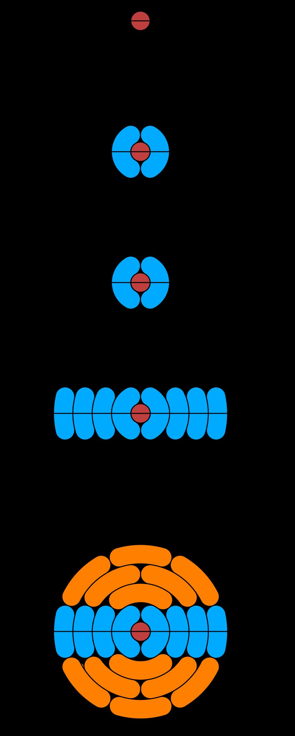 Digonal-spiral-fig3